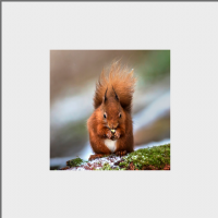 Red Squirrel Mounted Print FB_04_MM